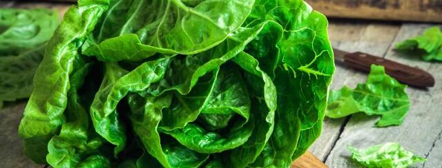Chicken Lettuce Wraps image